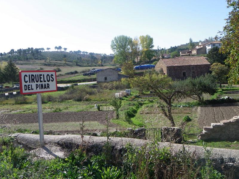Ciruelos-del-Pinar