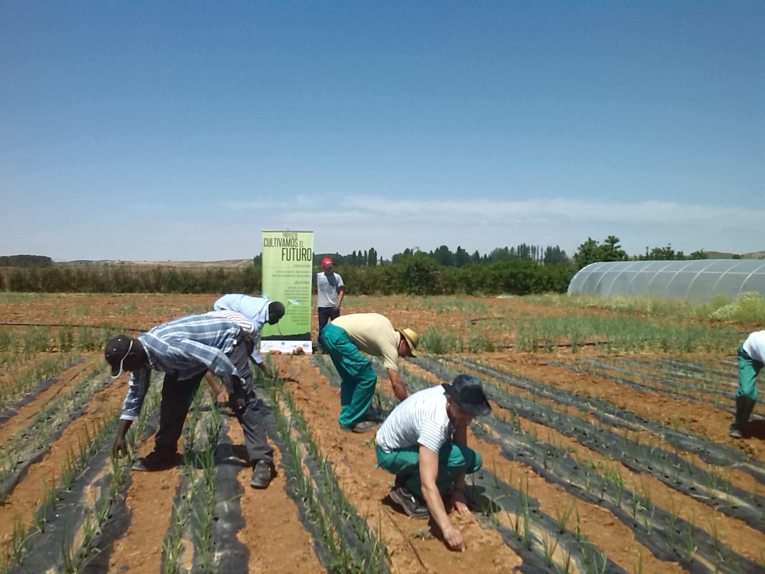 cultivamos fuentepinila3